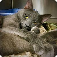 Adopt A Pet :: Jordan - Webster, MA