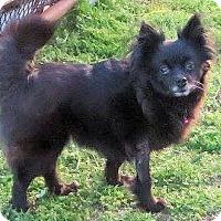 Adopt A Pet :: Miley - Naugatuck, CT