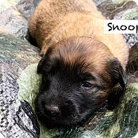 Adopt A Pet :: Snoopy - Alpharetta, GA