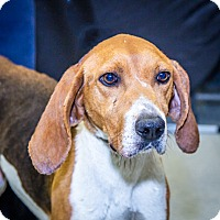 Adopt A Pet :: Slim Jim - Martinsville, IN