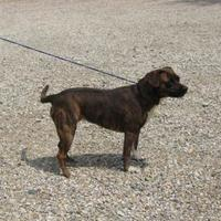 Adopt A Pet :: EMMA - Circleville, OH