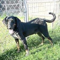 Adopt A Pet :: Hunter - Fayetteville, TN