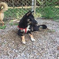 Adopt A Pet :: Larry - Hillside, IL