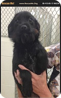 Terrier (Unknown Type, Small) Mix Dog for adoption in Wallingford Area, Connecticut - LuLuther