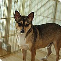 Adopt A Pet :: Parker - Los Angeles, CA