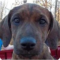 Adopt A Pet :: Weaver - Plainfield, CT