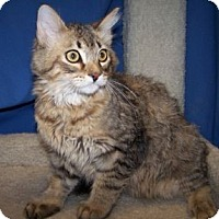 Adopt A Pet :: K-Rescue2-Sven - Colorado Springs, CO