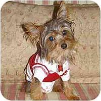 Adopt A Pet :: Bachee - Tallahassee, FL