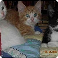 Adopt A Pet :: Avalon - Riverside, RI