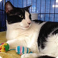 Adopt A Pet :: Penny - Gaithersburg, MD