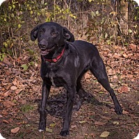 Adopt A Pet :: Pepper - Lewisville, IN