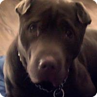 Adopt A Pet :: Mojo - Barnegat Light, NJ