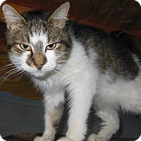 Adopt A Pet :: Finn - Sanford, ME