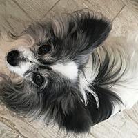 Adopt A Pet :: Wyzer  (in FL) 14 yrs - Marietta, GA