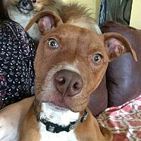 Adopt A Pet :: Huck - Greensboro, MD