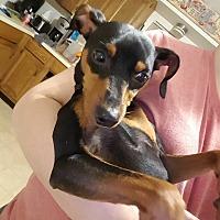 Adopt A Pet :: Timon - Sharon Center, OH