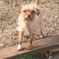Adopt A Pet :: Button - Southlake, TX