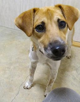 Terrier (Unknown Type, Medium) Mix Dog for adoption in Holly Springs, Mississippi - Polly