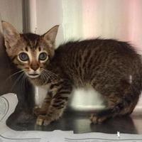 Adopt A Pet :: Suds - Clarkesville, GA