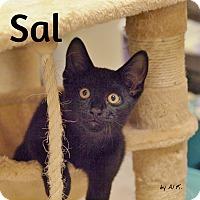 Adopt A Pet :: Sal - Ocean City, NJ