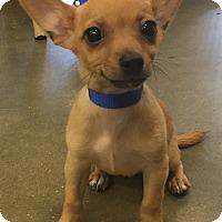 Adopt A Pet :: Bertha#3M - Orlando, FL