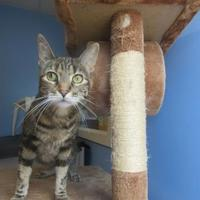 Adopt A Pet :: Wilma - Northfield, MN