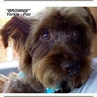Adopt A Pet :: Brownie - El Cajon, CA