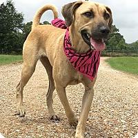 Adopt A Pet :: Thelma - St. Francisville, LA