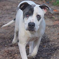 Adopt A Pet :: Angel - Lucedale, MS