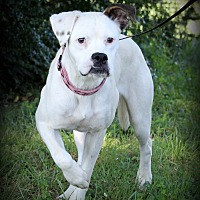 Adopt A Pet :: Betty Boop - Southbury, CT