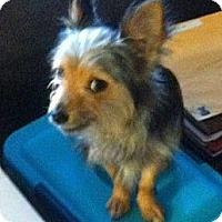 Adopt A Pet :: Casey - Houston, TX