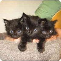 Adopt A Pet :: Lyle - Davis, CA