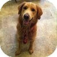 Adopt A Pet :: Nate - Yorktown, VA