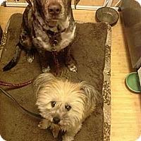 Adopt A Pet :: BUDDY-JJ - Roundup, MT