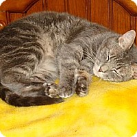 Adopt A Pet :: Dani (aka Dani Doodle) - Spotsylvania, VA