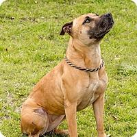 Adopt A Pet :: Karma - El Campo, TX