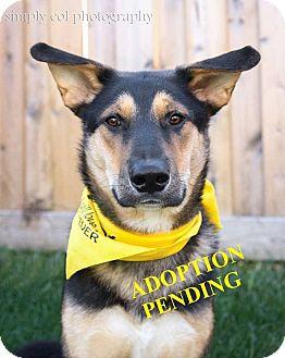 German Shepherd Dog Mix Dog for adoption in Winnipeg, Manitoba - JOIE