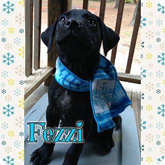 Labrador Retriever Mix Puppy for adoption in Sagaponack, New York - Fezzie