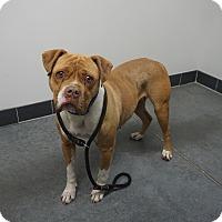 Adopt A Pet :: Barbye - Farmington, NM