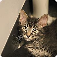 Adopt A Pet :: Tamu - Lincoln, NE