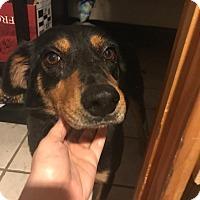 Adopt A Pet :: Carmella - Staten Island, NY