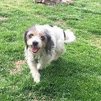 Adopt A Pet :: Dixie (ETAA) - Foster, RI