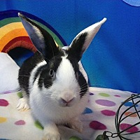 Other/Unknown Mix for adoption in Trenton, North Carolina - Bambi