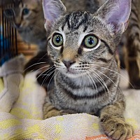 Adopt A Pet :: Espresso - Hammond, LA