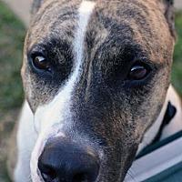 Adopt A Pet :: Miss Christine - St. Louis, MO