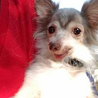 Adopt A Pet :: Nitro - Hamilton, ON