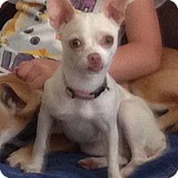 Adopt A Pet :: Julie - Broomfield, CO