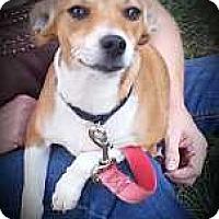 Adopt A Pet :: Spring - Columbus, OH