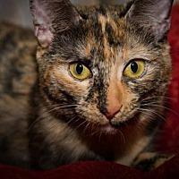 Adopt A Pet :: General - BROOKSVILLE, FL