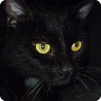 Adopt A Pet :: Gibson - Hamburg, NY